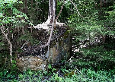 Tree-on-top-of-Rock-Photo3.jpg